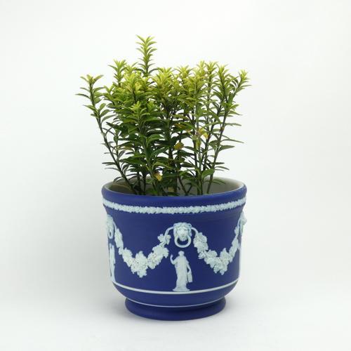 Small Jardiniere