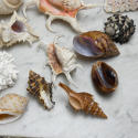 Shell Collection - picture 2
