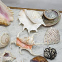 Shell Collection - picture 3