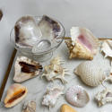 Shell Collection - picture 4