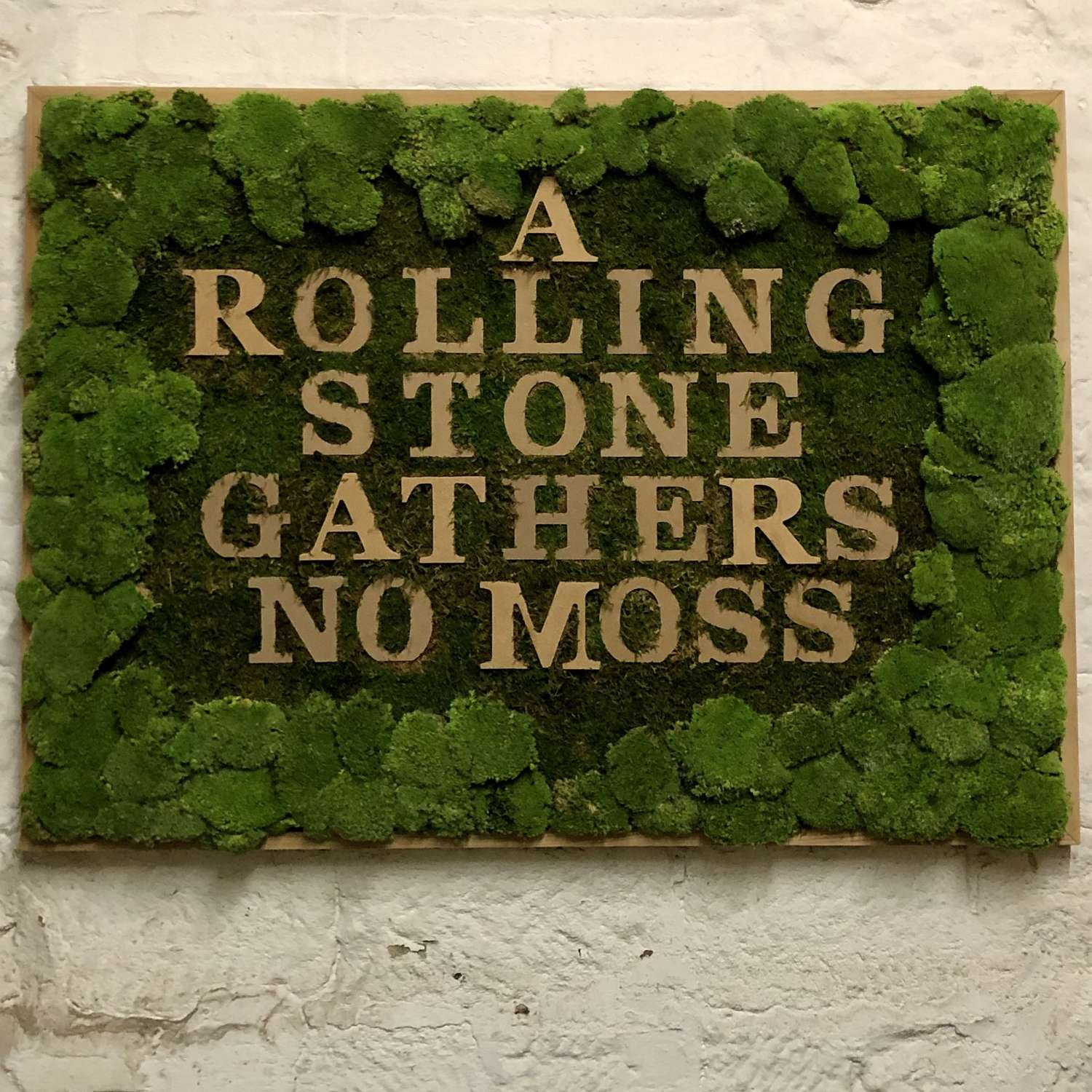 Preserved moss 'A Rolling Stone Gathers No Moss' Framed.