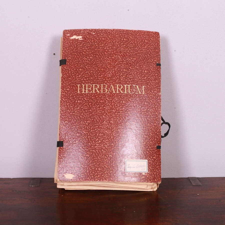 Collection of Swedish Herbariums