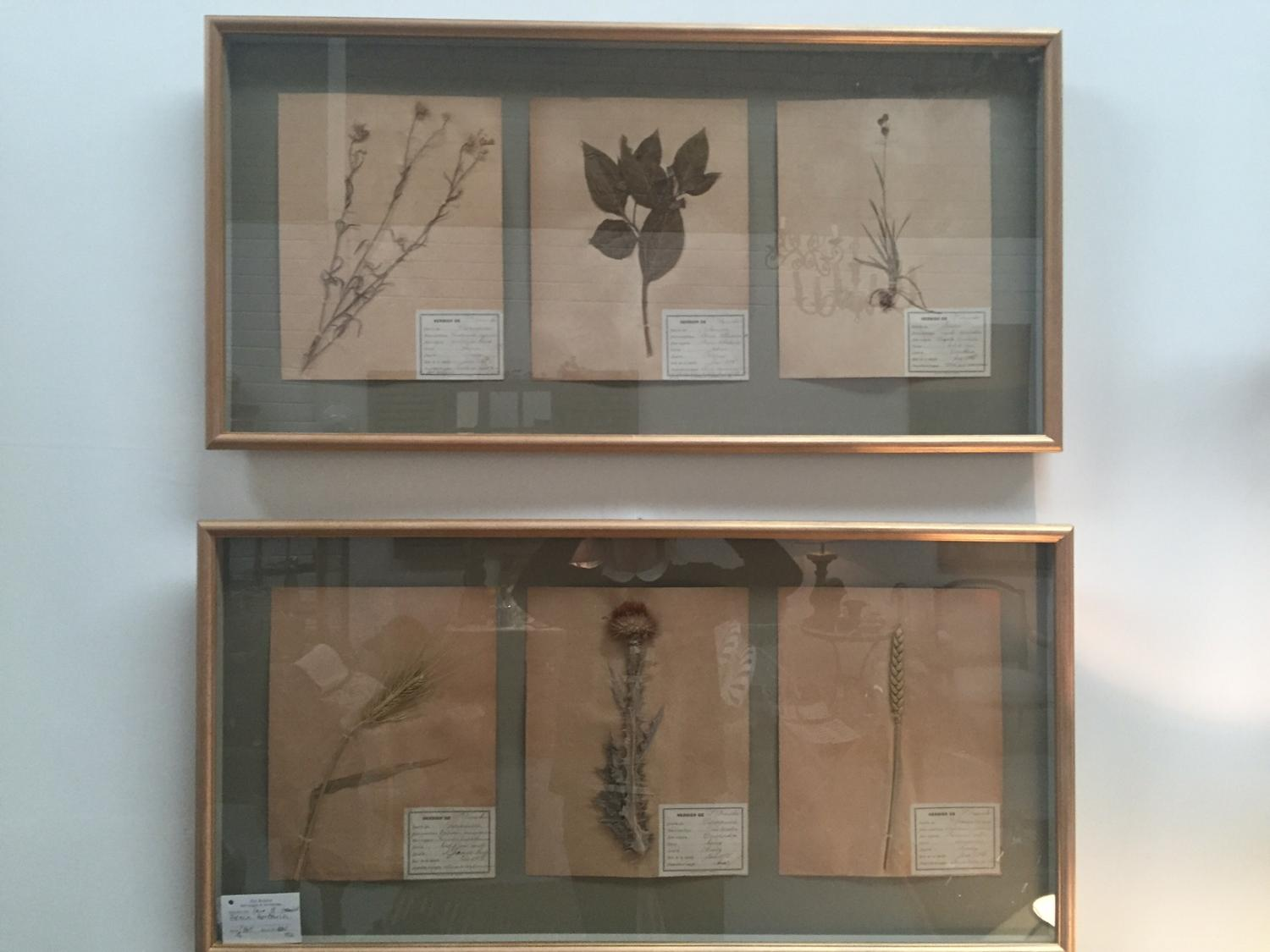 Pair of Framed French Herbaria