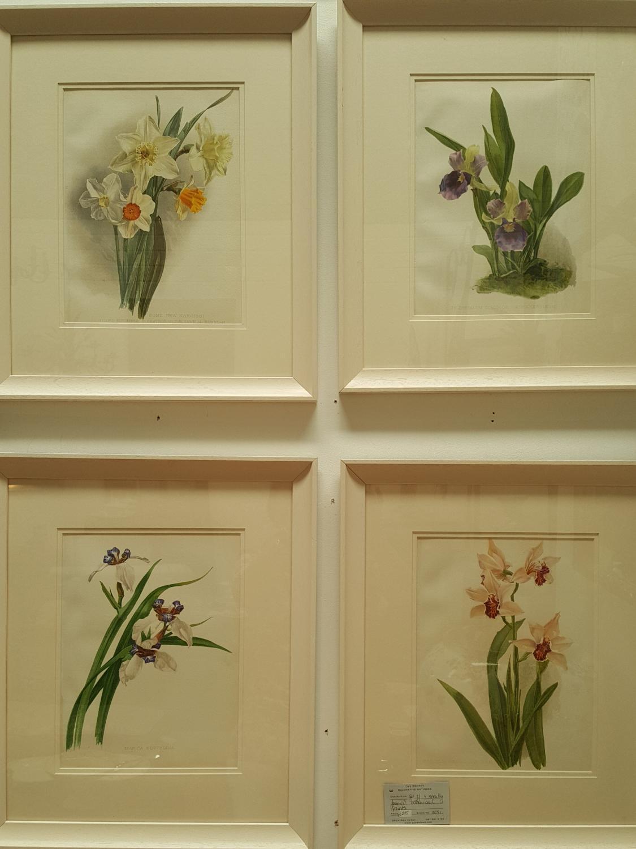 Set of 4 botanical chromolithograph prints c.1905