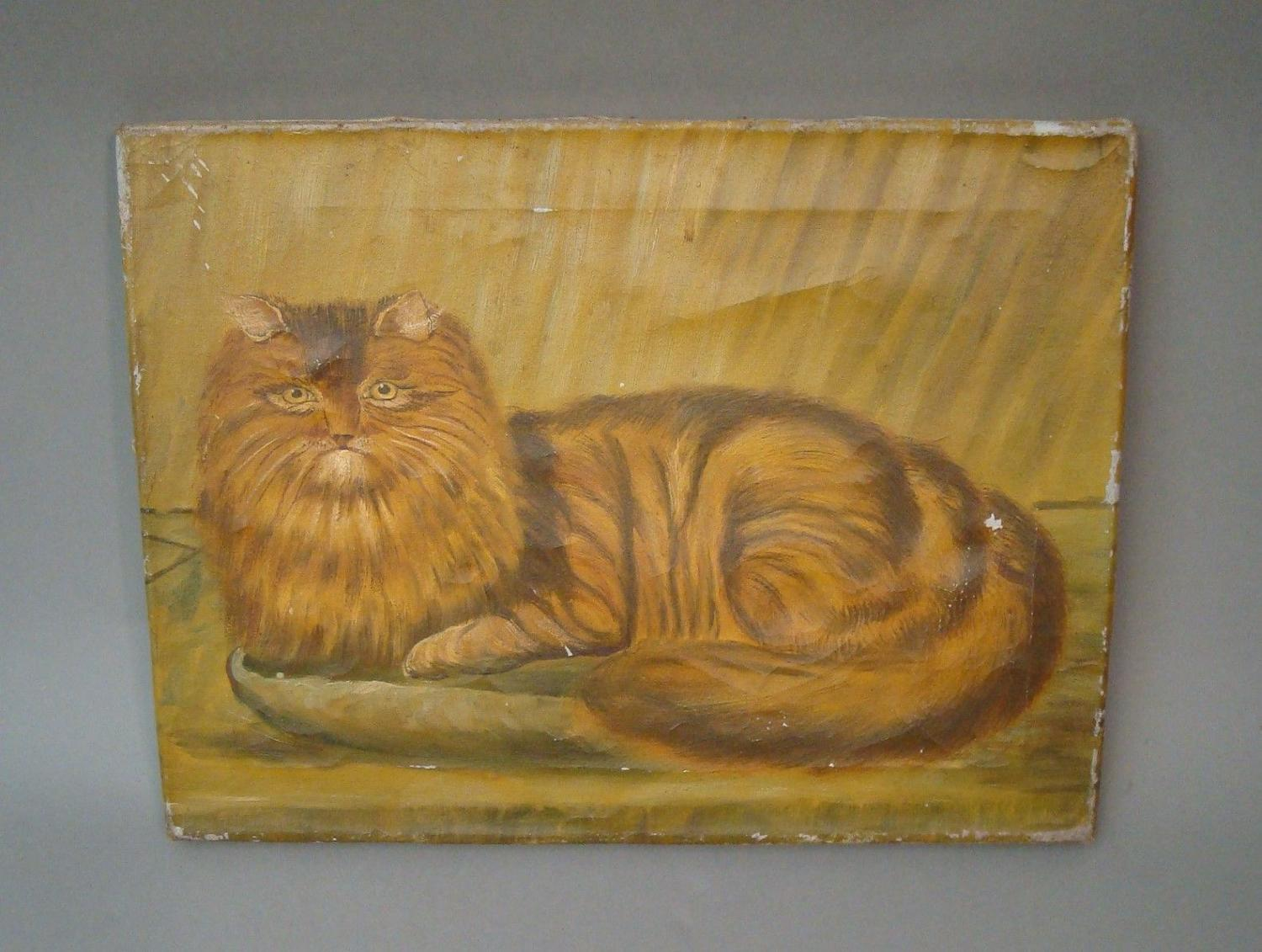 C19th primitive oil on canvas of cat