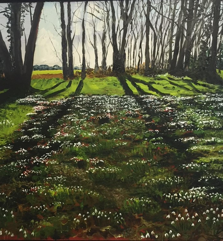 Snowdrops, Wiltshire