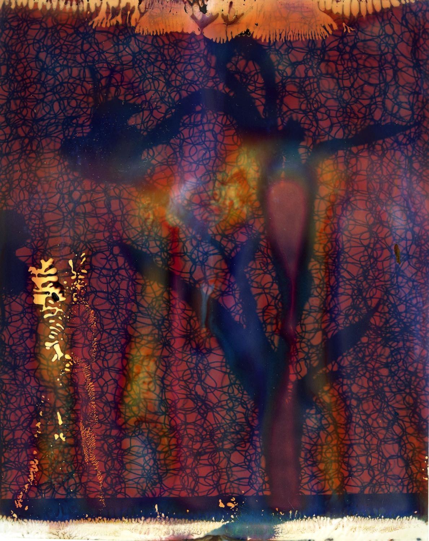 Alexander James - PhotoGram plate no. 006