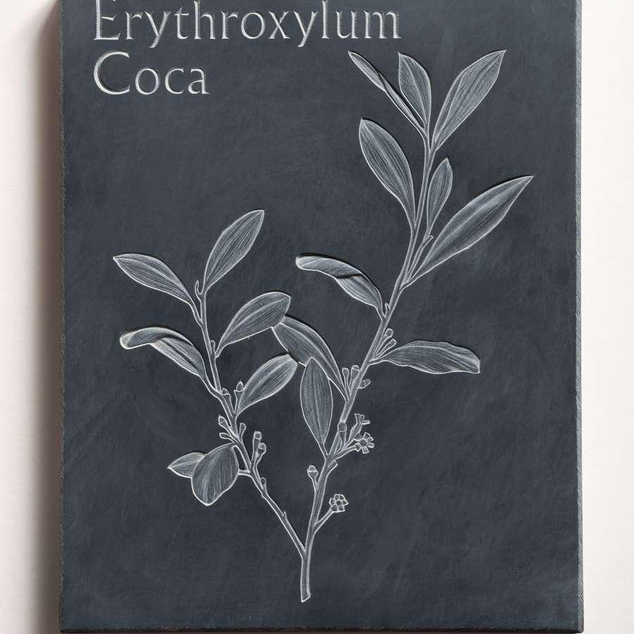 Tracy Steel. Erythroxylum Coca - Cocaine.