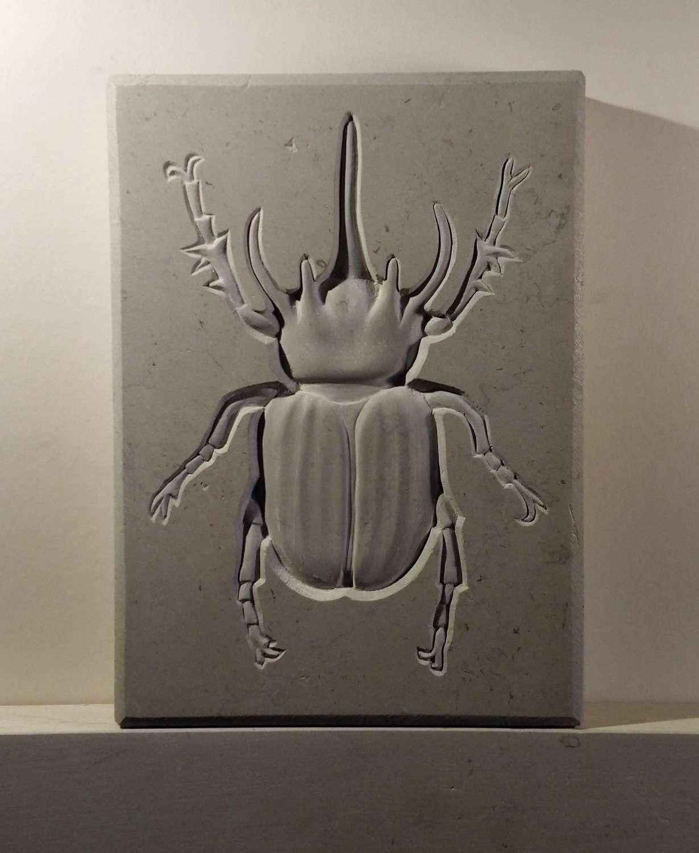 Tracy Steel. Rhino Beetle.
