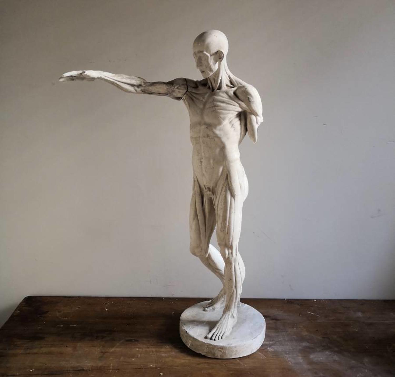 Antique Ecorche figure after Houdon