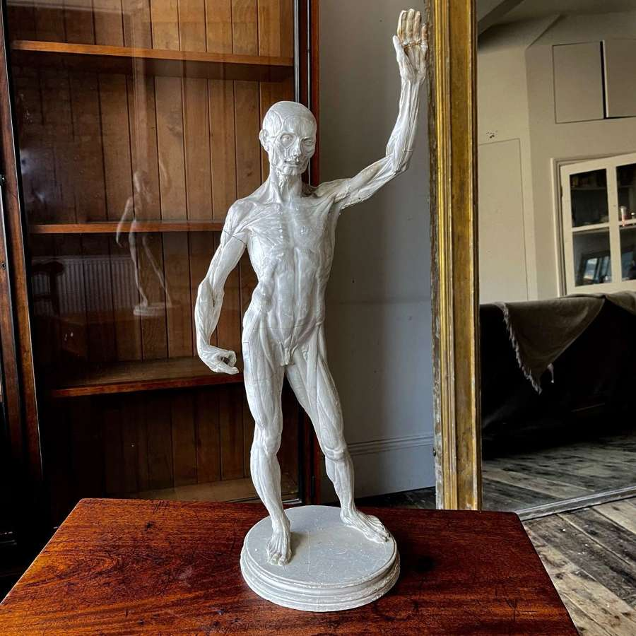 Ecorche or flayed man after Houdon.